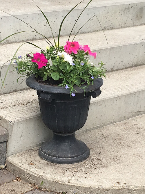Annuals in a Black Planter