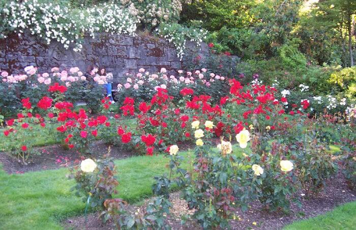 International Test Rose Garden, Portland OR flickr Neeta Ling
