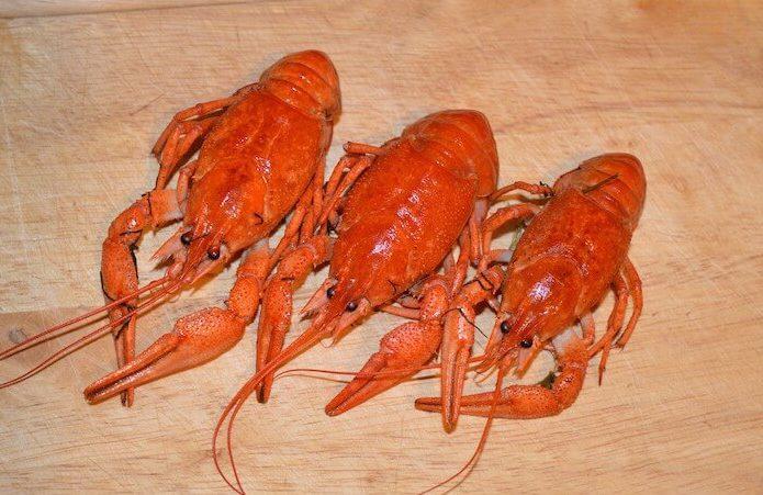 Lobster pixabay AKuptsova